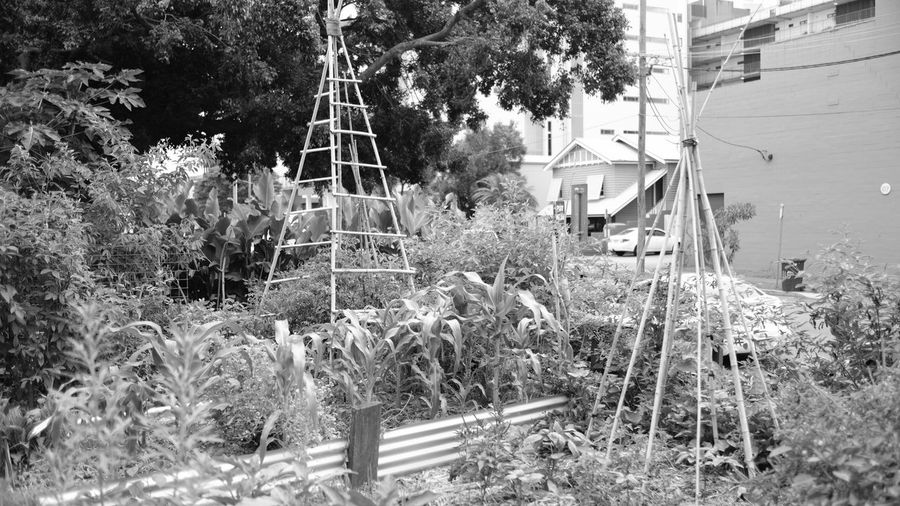 Architecture Beautiful Nature Black & White Black And White Blackandwhite Blackandwhite Photography Brisbane Building Exterior Built Structure Community Garden Day Fujifilm Growth Monochrome Nature No People Outdoors Plant Tree