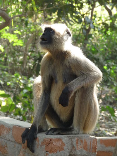 Even I have emotions too Animal Wildlife Animals In The Wild Day Focus On Foreground Full Length Looking Mammal Monkey One Animal Outdoors Sitting