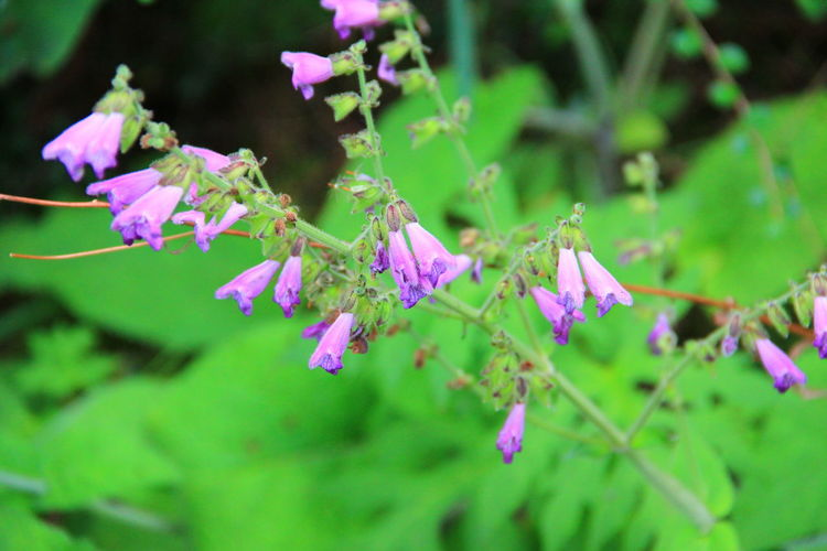 Plant Flowering Plant Flower Pink Color Growth Beauty In Nature Vulnerability  Fragility Purple No People Close-up Freshness Selective Focus Nature Outdoors Petal Flower Head
