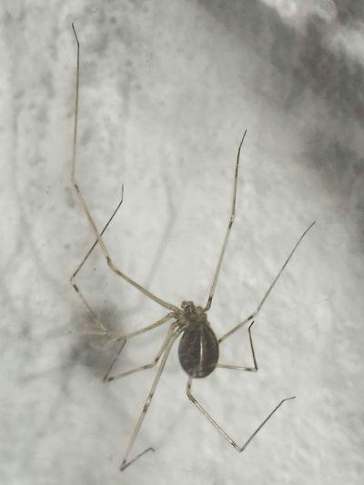La araña misma xD Encuentros Inesperados Inquilino Sorprise