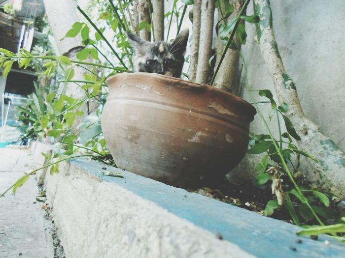 Uma★ Cats Catlovers Catworld Taking Photos My Cat Catlover ♡ GalaxyLove