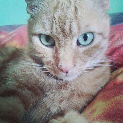 Felix ♡ Cat Kitty Cute