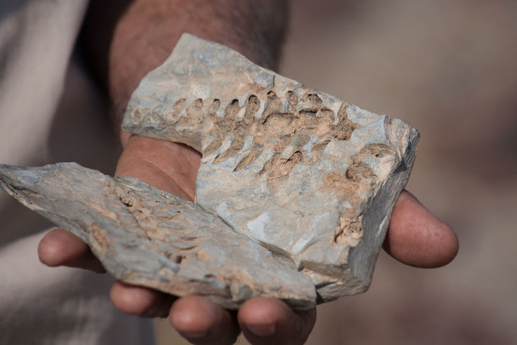 Person holding fossil rocks