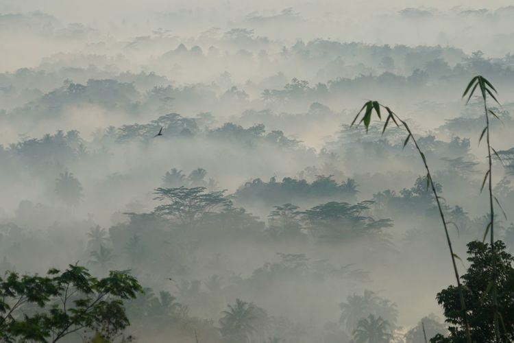 Bamboo trees Plant Tree Fog Beauty In Nature Nature Environment Land Outdoors Winter Landscape Tranquility Sky Mountain Forest Morning Growth Cold Temperature Scenics - Nature No People