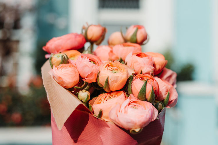 Nothing Hill Outdoors Freshness Flowering Plant Flower Focus On Foreground Close-up Plant Beauty In Nature Vulnerability  Fragility Petal Rosé Flower Head Nature Inflorescence No People Rose - Flower Pink Color Day Coral Colored Flower Arrangement Bouquet
