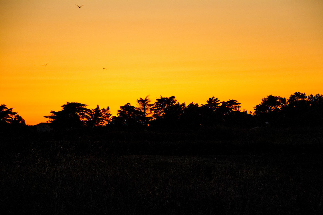 sunset, silhouette, nature, tree, beauty in nature, scenics, tranquil scene, orange color, landscape, tranquility, no people, outdoors, yellow, sky, growth, forest, clear sky