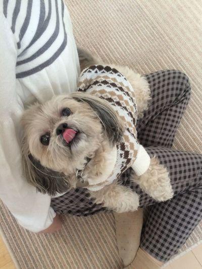I Love My Dog 犬 DogLove