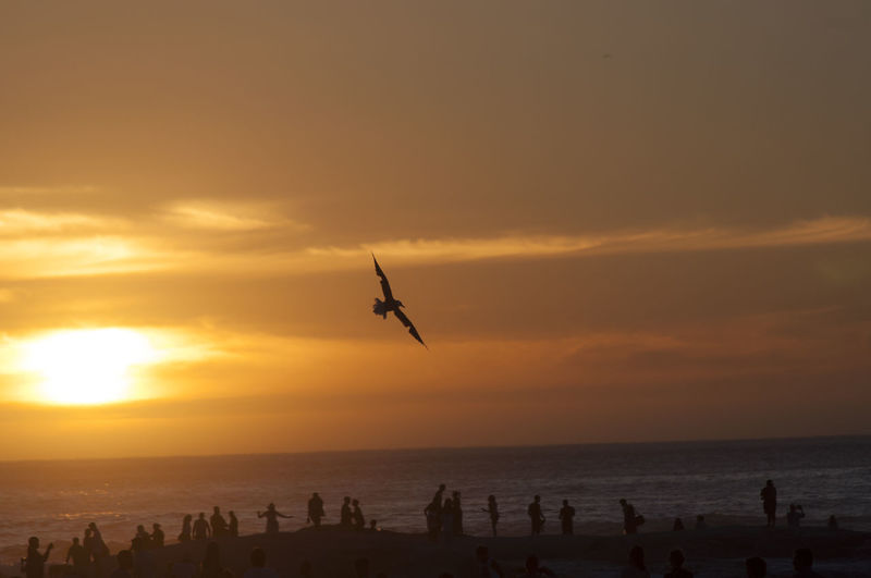 Sunset bird