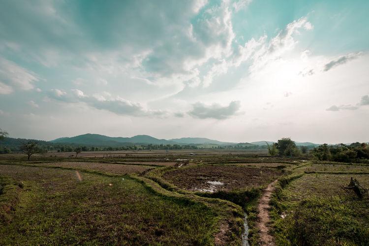 Rice field in countrysideThe Great Outdoors - 2017 EyeEm Awards
