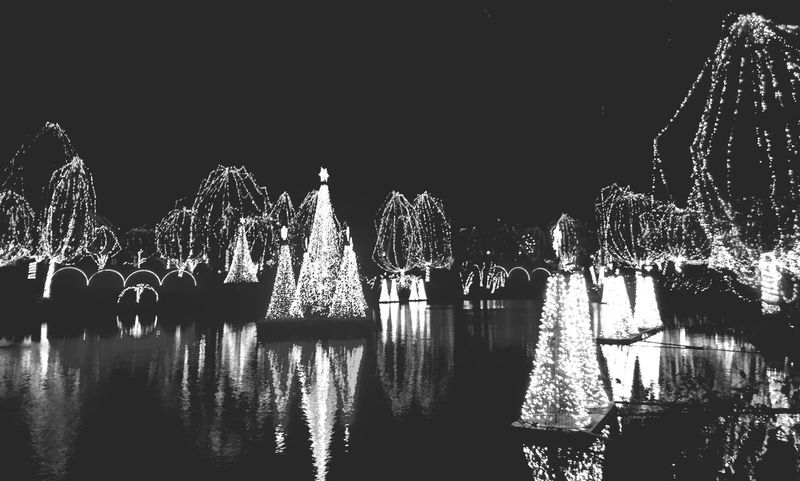 Light Blackandwhite Zoolights  Streetphotography Streetphoto_bw Reflection Water Reflections Enjoying Life Christmas