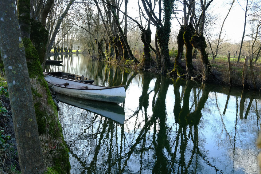 Water Tree Reflection Plant Lake Tree Trunk Tranquility Nature Trunk Waterfront Nautical Vessel No People Day Transportation Beauty In Nature Tranquil Scene Mode Of Transportation Bare Tree Branch Outdoors