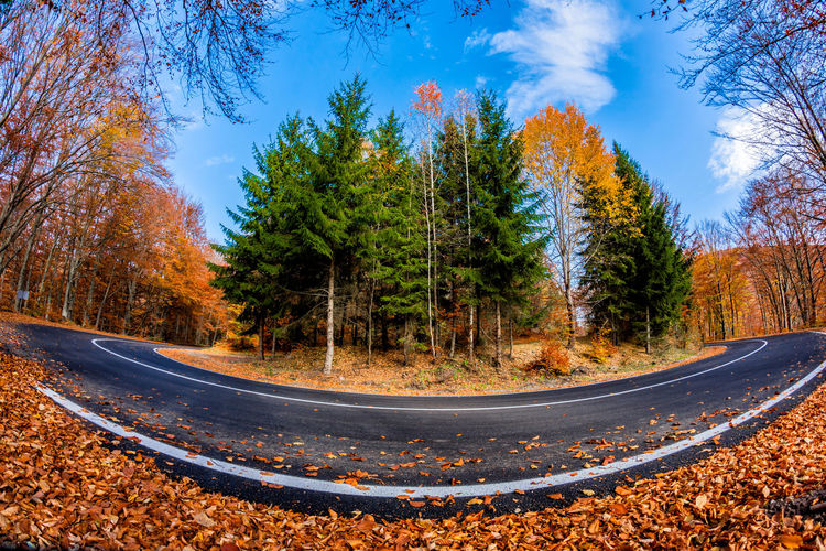 Surface level of road amidst trees against sky during autumn