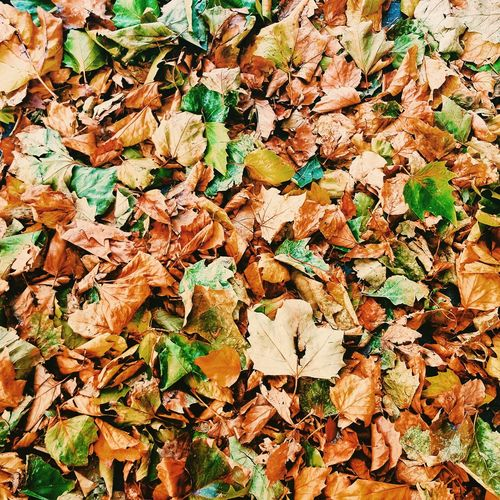 Full Frame Backgrounds Abundance Large Group Of Objects Day No People Outdoors Textured  Close-up Multi Colored Nature Autumn Autumn Leaves Autumn Colors Dublin Ireland Brown Cozy Nature
