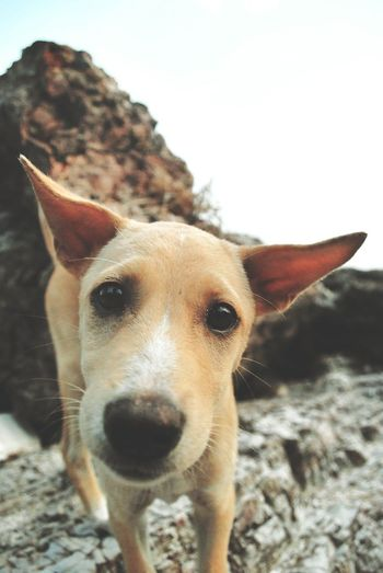 The puppy sea Looking At Camera🐶 Portrait One Animal Animal Head  Close-up Pets Dog Domestic Animals Animal Themes No People Day Mammal Outdoors Sky Puppy Puppydog Puppyeye Dogs Doglover Puppy Looking At The Camera