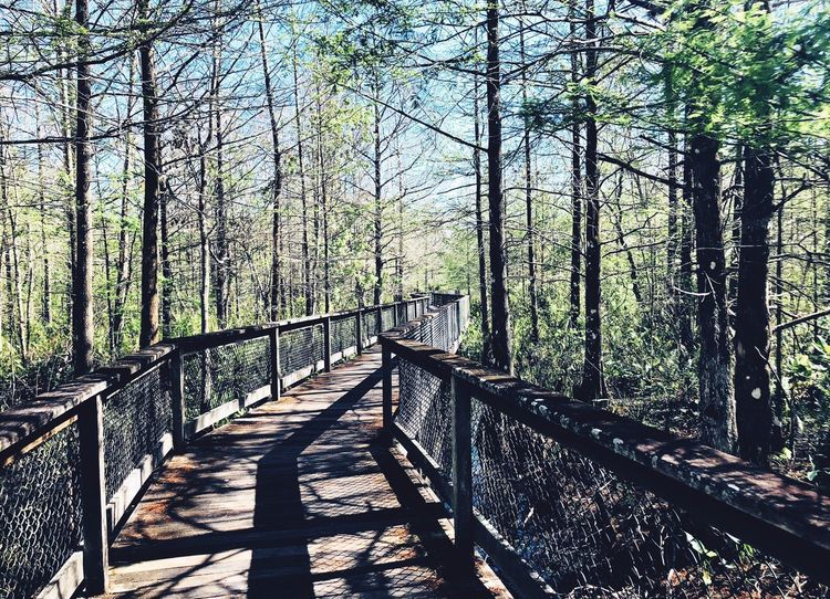 Beautiful day for a walk Tree Forest Nature Day Railing Sunlight Tree Trunk Tranquil Scene Outdoors No People Shadow Growth Tranquility Scenics Sky Beauty In Nature