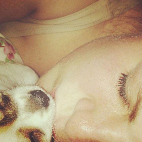 I Love My Dog Cute Pets Chihuahua My Dog <3 :*