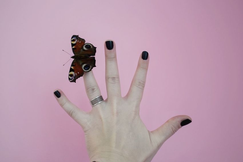 🦋 Butterflies series 🦋 Human Hand One Person Pink Color Human Body Part Holding Studio Shot Real People Close-up Adult People Pink Background Animal Themes Butterfly Collection Personal Perspective Unrecognizable Person European Peacock Butterfly - Insect Peacock Butterfly European Peacock Butterfly Aglais Io Rethink Things