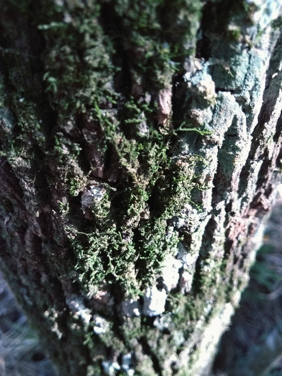 tree trunk, textured, moss, close-up, tree, no people, selective focus, rough, wood - material, nature, growth, day, bark, outdoors