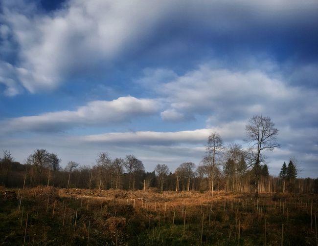 Burgundy Forest