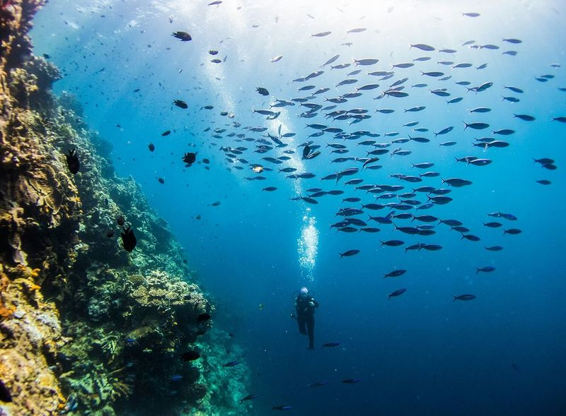 Flew to Bunaken Island, Manado Indonesia, stunned by the wall dive... I will follow my wife to the ends of the earth, but sometimes I worry when she goes a bit deep in this bottomless blue Traveling Nature Landscape Travel Photography The Traveler - 2015 EyeEm Awards Underwater Photography SCUBA Capture The Moment People Scuba Diving . People Of The Oceans