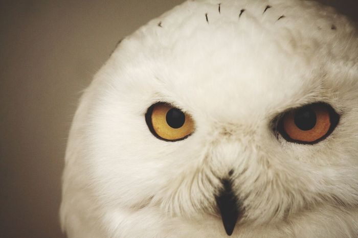Animals Owl Enjoying Life EyeEm Best Shots Eyes EyeEm Animal Lover Cool Taking Photos Check This Out Holiday Waiting Game My Year My View