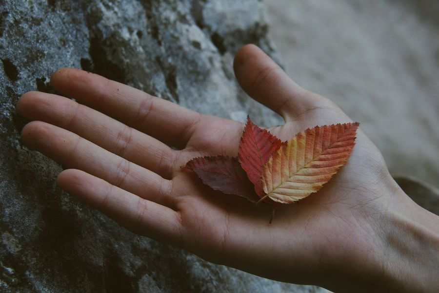 Show your true colors Leaf Autumn Human Hand Human Body Part One Person Holding Nature Close-up Real People Outdoors