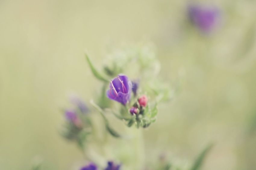 Farbspiel Macro Photography Nature Photography My Point Of View My Place To Relax Hergershäuser Wiesen Macro Beauty Focus On Foreground Focus Flower Head Flower Purple Close-up Plant Wildflower Flowering Plant