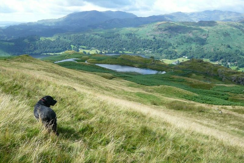 Gorgeous Green Hill in Lake District , England - love this area! Hiking with Dog , Labrador Hills View Essence Of Summer Summer Lake District Series Hike No People Black Dog Green Green Tones Hillside Trekking Nature Tranquillity Different Shades Of Green Peacefulness