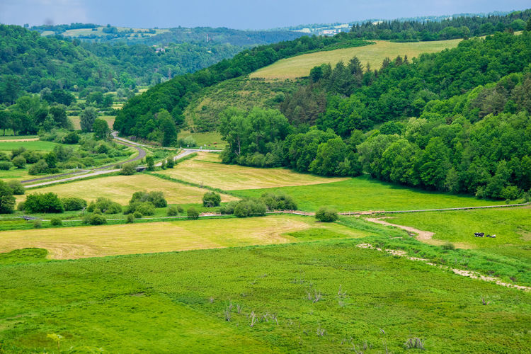 Scenic view of rural landscape