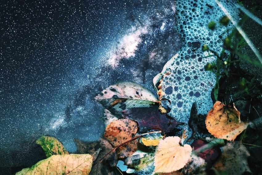 Nature Outdoors Beauty In Nature Stars Leaves Leaf Bubbles Water Photography Photoshop