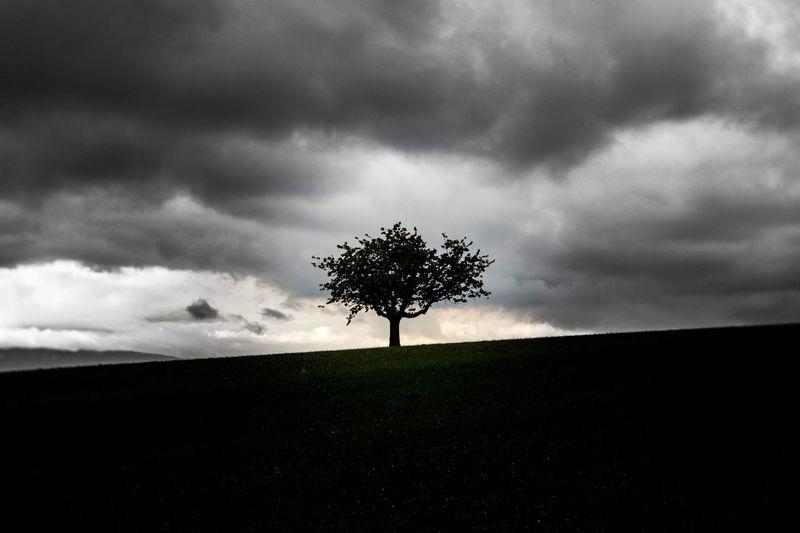 Tree, clouds,
