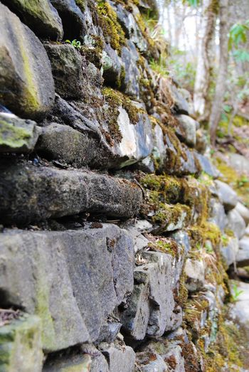 Rocks in the Mountains Rock Solid Rock - Object Nature Day No People Tree Beauty In Nature Stack Textured  Close-up Tranquility Tree Trunk Growth Forest Sunlight Land Plant Outdoors Moss