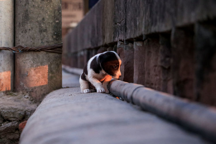 Looking forward into future Dog Feel Lonely Lonely Pet Looking Sunny Day In The Morning Beautiful Beauty In Nature Sunlight Eyes Eyesight Pet Collar Pet Leash My Best Photo