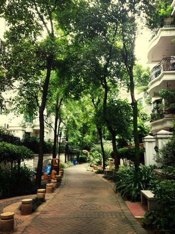 最是平常的周一,无阳光无雨也无风,不动的是心还是树叶