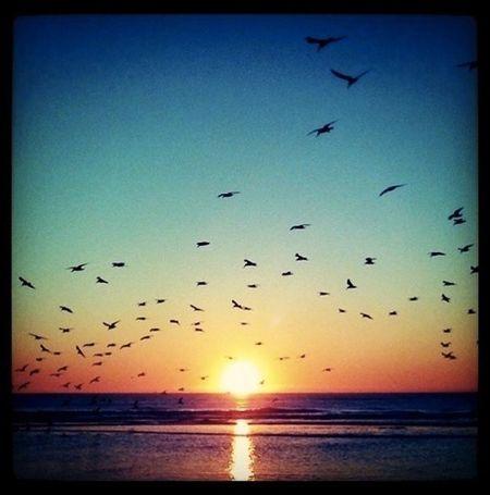 Sea Sunset Just dream!
