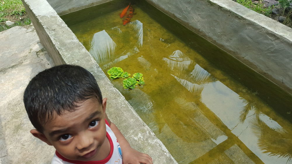 Boy at Fish Pond Fish Ponds Water Reflections Childhood Day Fish Fish Pond Gold Fish High Angle View Lifestyles Nature One Boy Only One Person Outdoors People Pond Fish Pond Reflections Pond Water Pondscape Portrait Real People Standing Water Water Lily Water Surface Water_collection