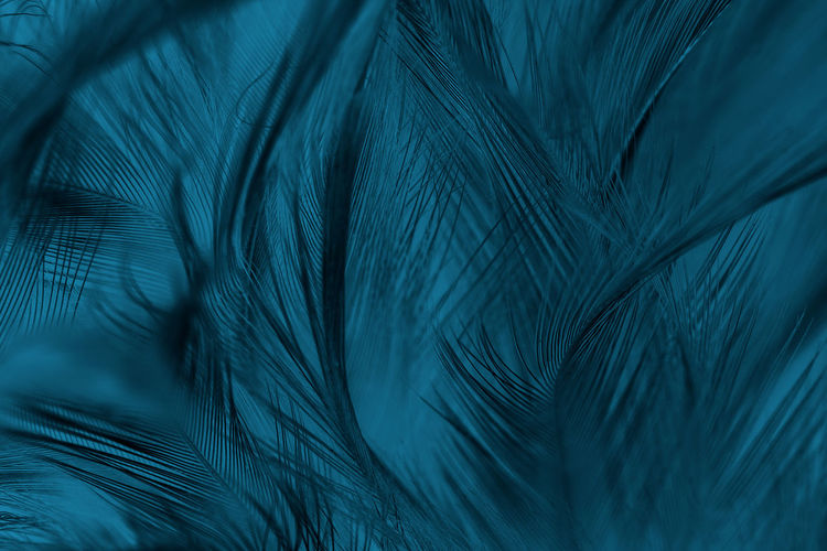Feather  Close-up No People Blue Lightweight Softness Bird Peacock Full Frame Backgrounds Peacock Feather Selective Focus Animal Animal Themes Abstract Nature Beauty In Nature Macro Pattern Natural Pattern Palm Leaf