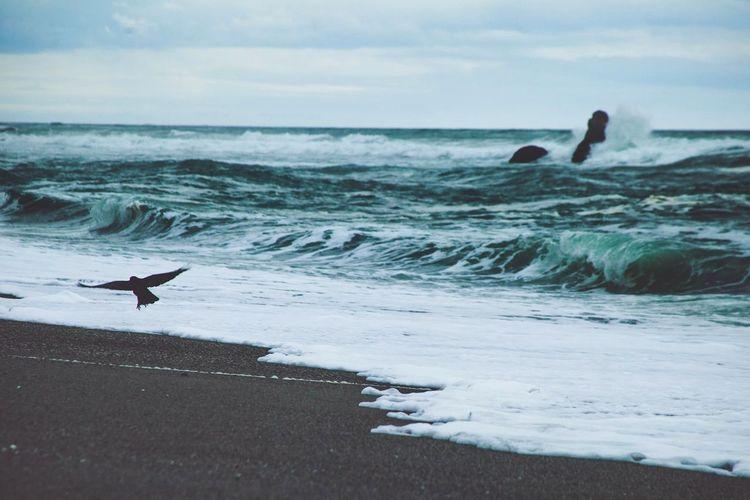Low angle view of bird landing at seashore