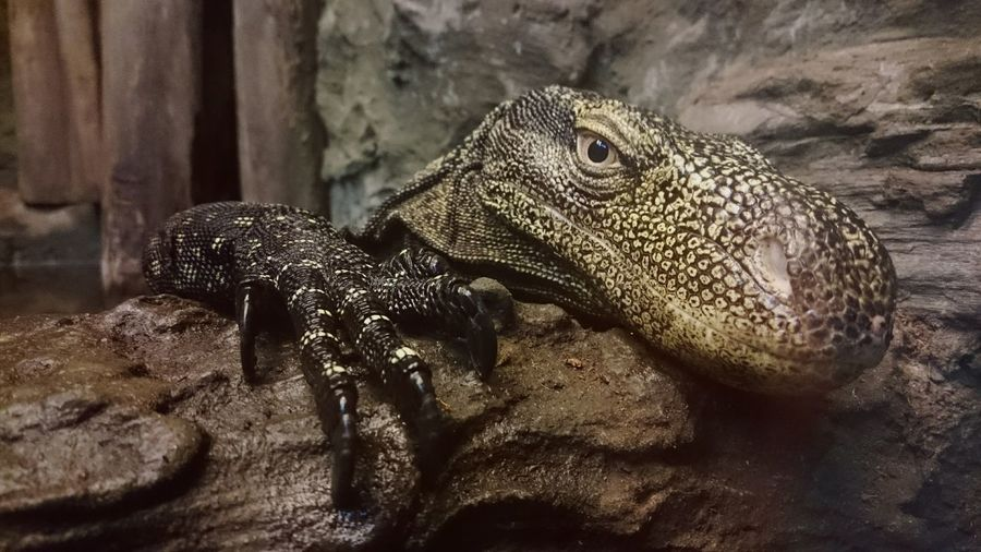 Reptiles Animal