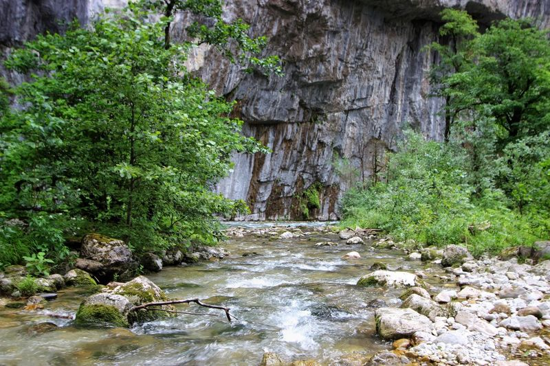 Rocky river of Abkhazia Green Grey Vertical Rock Formation Riverside Relaxing Moments Rocky River Tranquil Scene Canyon Nature Of Mountains Resting Place River In A Canyon Mountain River Trees And Nature Rocky Waters Rolling Water Nature Of Mountains Green And Grey Plant Water Tree Nature Growth Green Color Rock No People Forest Rock - Object Beauty In Nature Flowing Water Tranquility