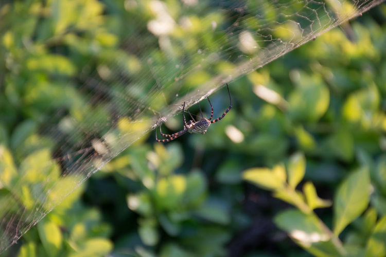Spider, Israel Animal Leg Animal Themes Animal Wildlife Animals In The Wild Beauty In Nature Close-up Complexity Day Fragility Insect Nature No People One Animal Outdoors Spider Spider Web Survival Web
