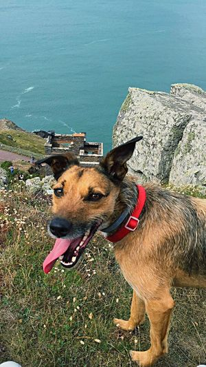 Handsome chap looking tired Dog Seaside Long Walks Minehead