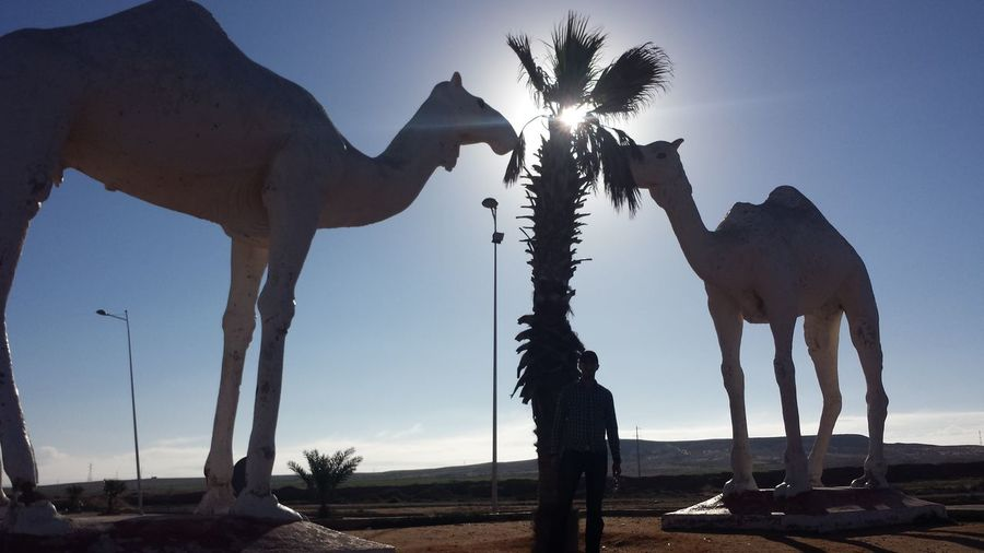 Full length of standing by camel statues on field against blue sky