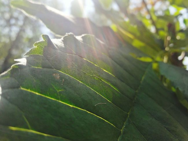 Leaf Nature Plant Growth No People Close-up Day Green Color Freshness Agriculture Outdoors Beauty In Nature Tranquility Landscape Freshness Cold Temperature Plant Flower Tree Fragility