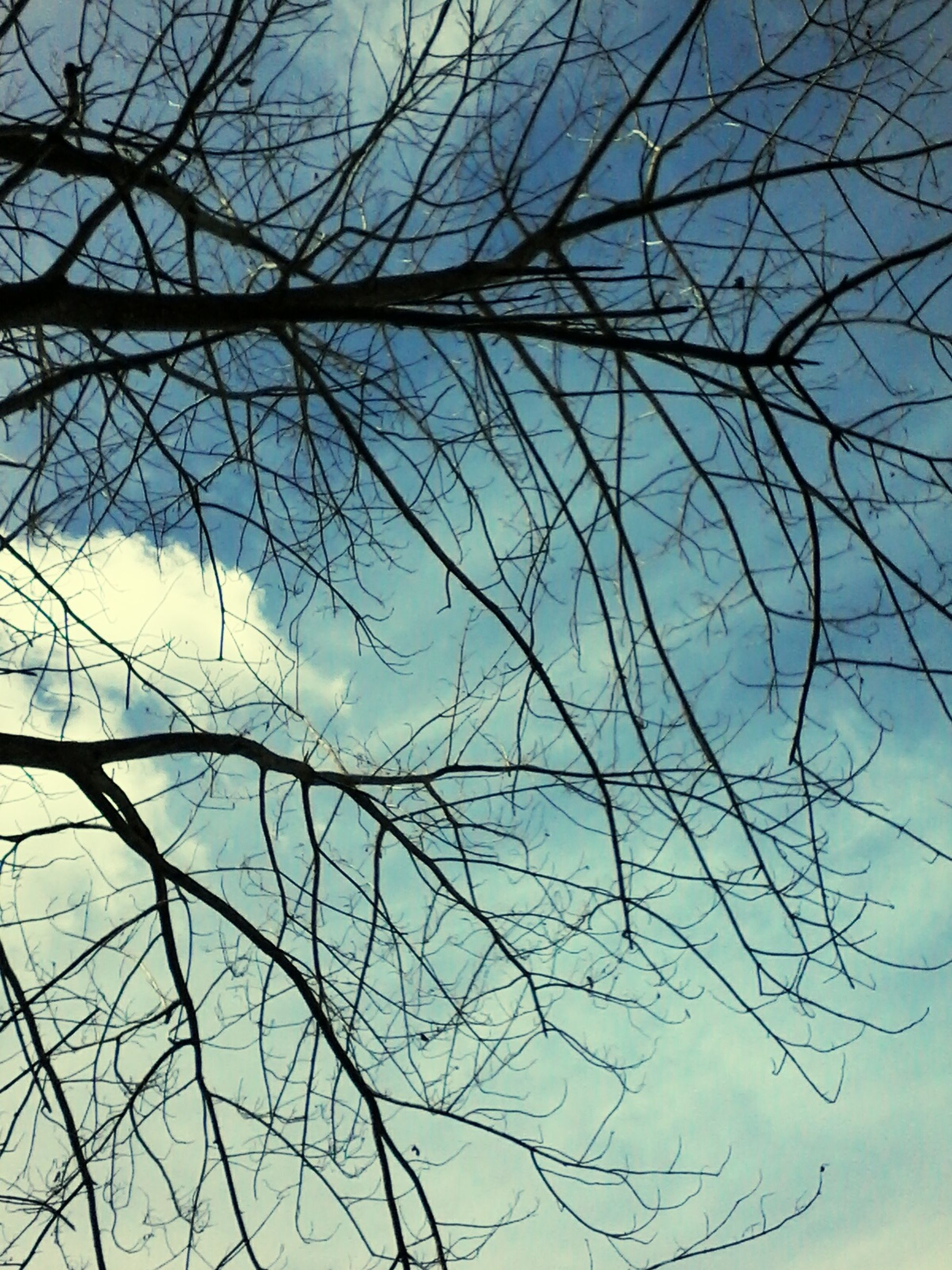 sky, bare tree, nature, tree, no people, tranquility, backgrounds, outdoors, branch, low angle view, beauty in nature, day, close-up