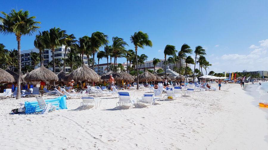 Beach @ Aruba Happiness Sand Beach Umbrella Palm Tree Tourism Sand Beach Aruba Sky Sunbathing Beach Holiday