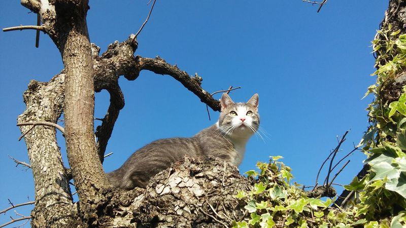 Good Morning Good Day Buongiorno Buona Giornata Cat Cats Catlovers Nautural Beauty Nature Bkue Sky