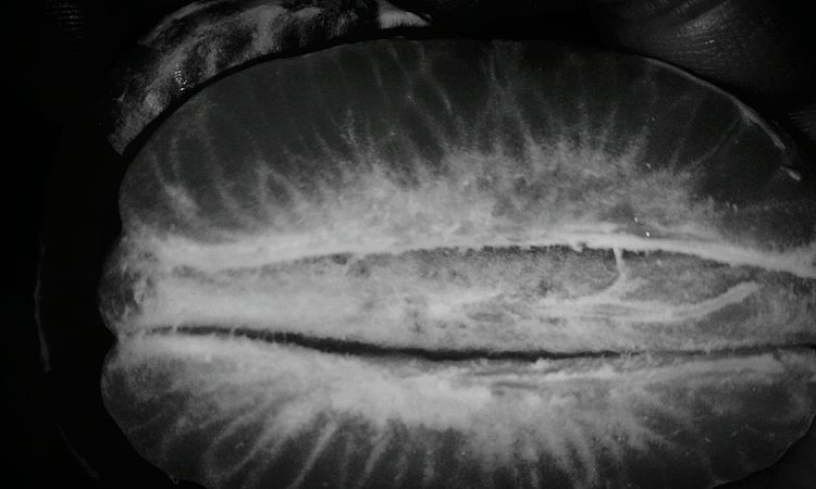 Healthy Eating Food And Drink Food Close-up Freshness No People Veins Natrually Beautiful Fruit Fruitporn Black And White