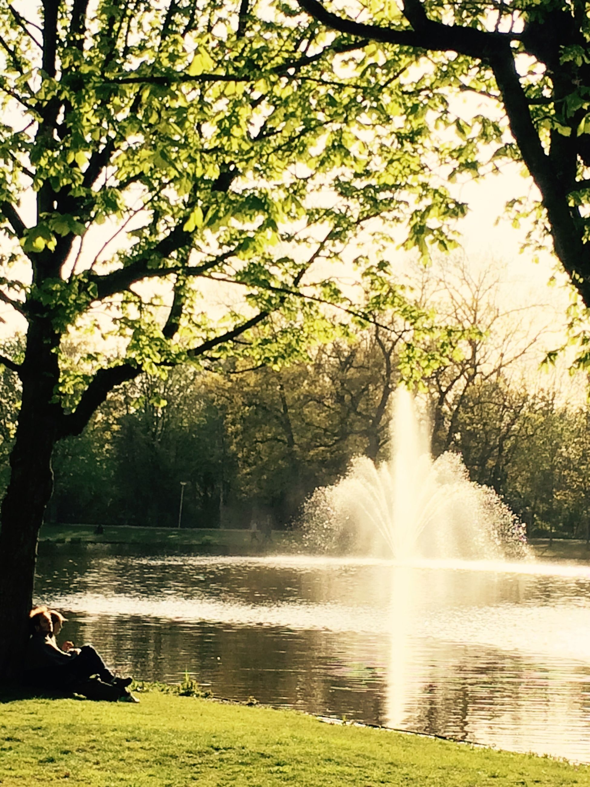 water, tree, motion, nature, lake, outdoors, day, beauty in nature, spraying, branch, scenics, growth, no people, grass