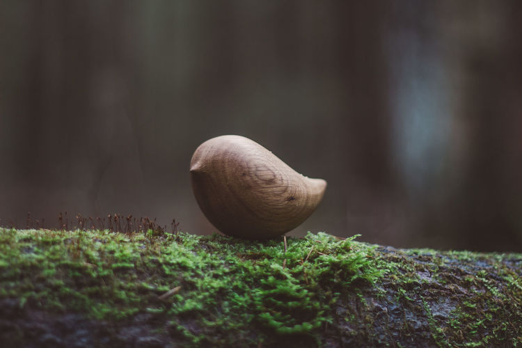 Toy Toys Wooden Wooden Toys Bird Nature Forest Grass Wood Close-up Plant Food Selective Focus No People Moss Day Tree Food And Drink Growth Nut Outdoors Green Color Nut - Food Tree Trunk Land Focus On Foreground Trunk Freshness My Best Photo